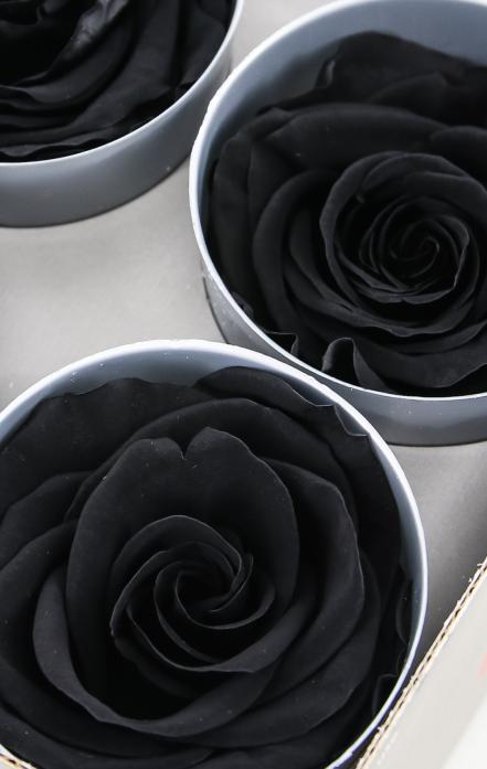 significado de una rosa negra